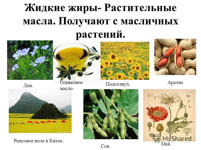 Жидкие жиры- Растительные масла. Получают с масличных растений. Рапсовое поле в Китае. Соя. Мак. Лен. Оливковое масло. Подсолнух. Арахис