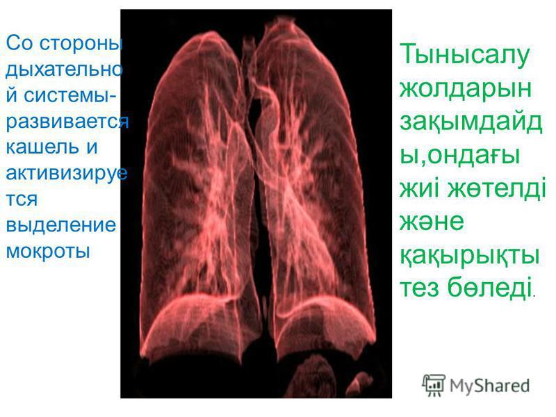 Со стороны дыхательной системы- развивается кашель и активизируется выделение мокроты Тынысалу жолдарын зақымдайд ы,ондағы жиі жөтелді және қақырықты тез бөледі.