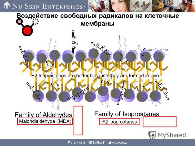 Воздействие свободных радикалов на клеточные мембраны Family of Aldehydes Family of Isoprostanes Malondialdehyde (MDA) F2 Isoprostanes F2 Isoprostanes are better because they are formed in vivo