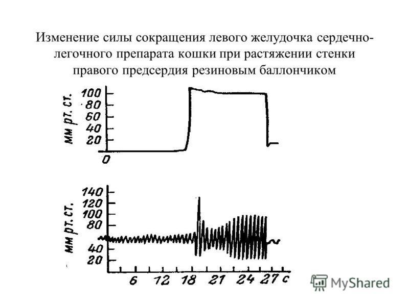 Изменение силы сокращения левого желудочка сердечно- легочного препарата кошки при растяжении стенки правого предсердия резиновым баллончиком