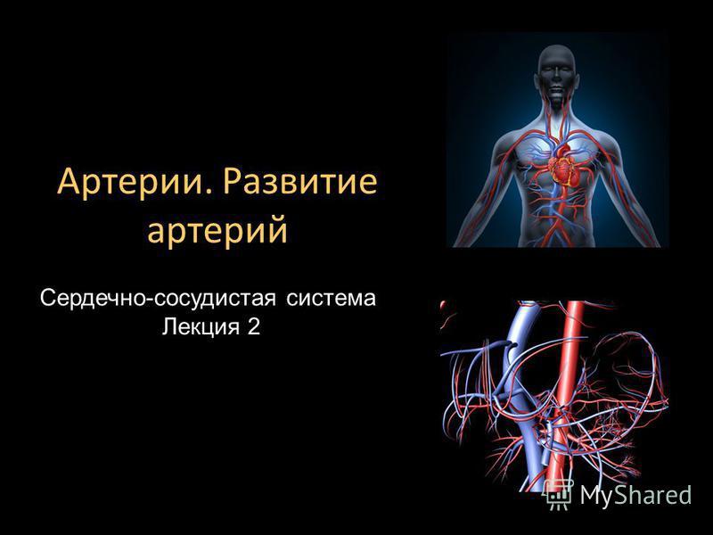 Сердечно-сосудистая система Лекция 2 Артерии. Развитие артерий