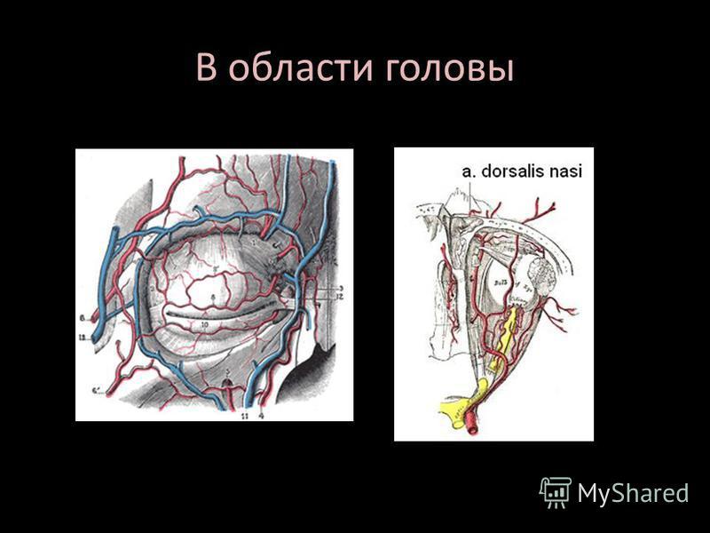 В области головы