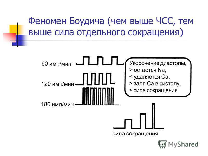 Феномен Боудича (чем выше ЧСС, тем выше сила отдельного сокращения)