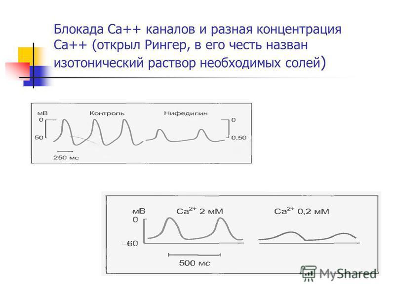 Блокада Ca++ каналов и разная концентрация Ca++ (открыл Рингер, в его честь назван изотонический раствор необходимых солей )