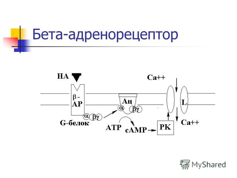 Бета-адренорецептор