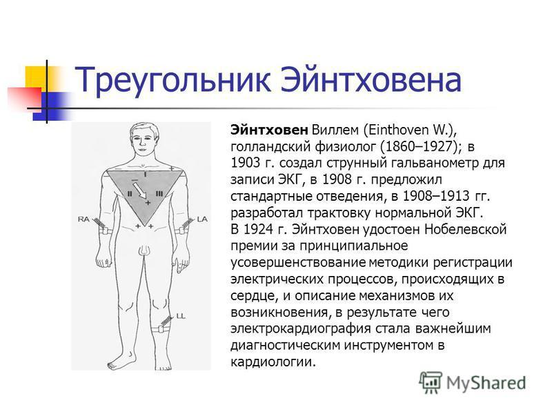 Треугольник Эйнтховена Эйнтховен Виллем (Einthoven W.), голландский физиолог (1860–1927); в 1903 г. создал струнный гальванометр для записи ЭКГ, в 1908 г. предложил стандартные отведения, в 1908–1913 гг. разработал трактовку нормальной ЭКГ. В 1924 г.