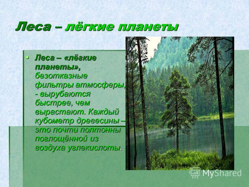 Леса – лёгкие планеты Леса – «лёгкие планеты», безотказные фильтры атмосферы, - вырубаются быстрее, чем вырастают. Каждый кубометр древесины – это почти полтонны поглощённой из воздуха углекислоты. Леса – «лёгкие планеты», безотказные фильтры атмосфе