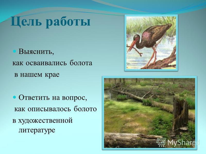 Цель работы Выяснить, как осваивались болота в нашем крае Ответить на вопрос, как описывалось болото в художественной литературе