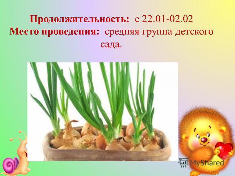 Продолжительность: с 22.01-02.02 Место проведения: средняя группа детского сада.