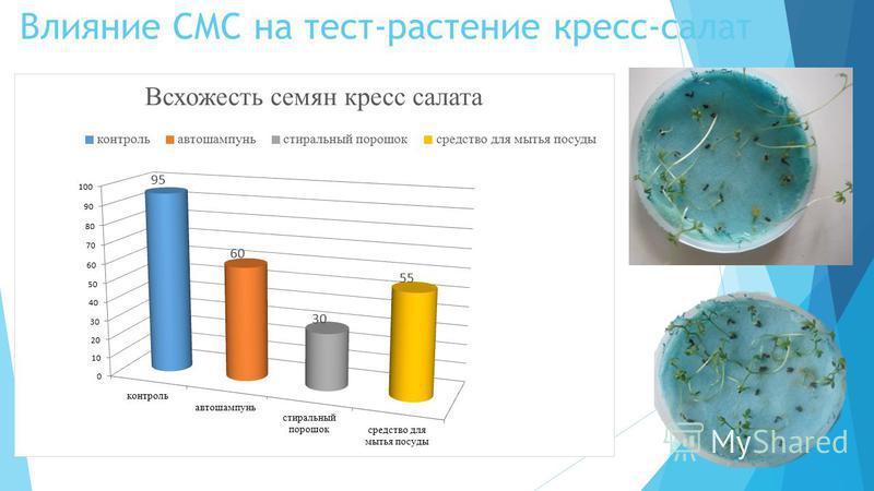 Влияние СМС на тест-растение кресс-салат