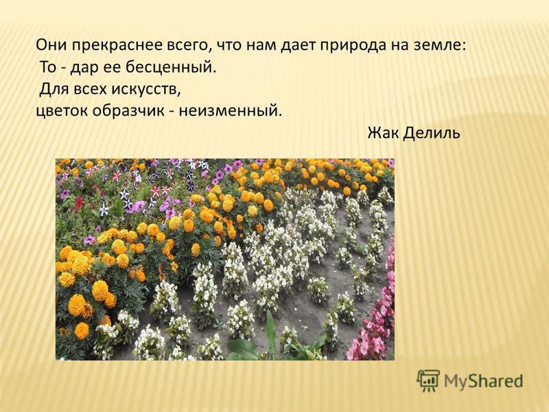 Они прекраснее всего, что нам дает природа на земле: То - дар ее бесценный. Для всех искусств, цветок образчик - неизменный. Жак Делиль
