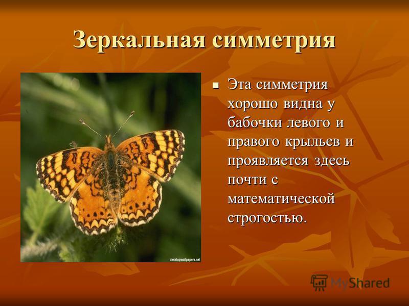 Зеркальная симметрия Эта симметрия хорошо видна у бабочки левого и правого крыльев и проявляется здесь почти с математической строгостью. Эта симметрия хорошо видна у бабочки левого и правого крыльев и проявляется здесь почти с математической строгос