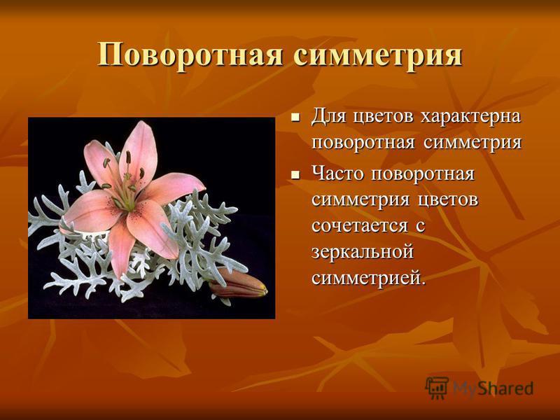 Поворотная симметрия Для цветов характерна поворотная симметрия Для цветов характерна поворотная симметрия Часто поворотная симметрия цветов сочетается с зеркальной симметрией. Часто поворотная симметрия цветов сочетается с зеркальной симметрией.
