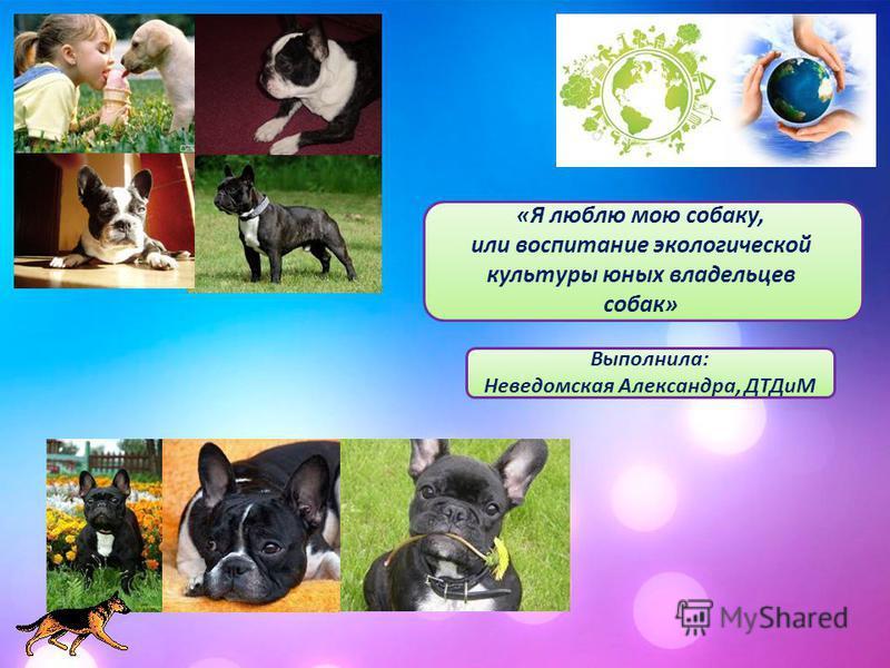 «Я люблю мою собаку, или воспитание экологической культуры юных владельцев собак» Выполнила: Неведомская Александра, ДТДиМ