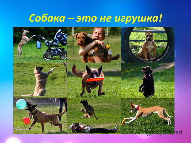 Собака – это не игрушка!