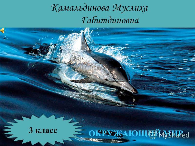Камальдинова Муслиха Габитдиновна 3 класс ОКРУЖАЮЩИЙ МИР