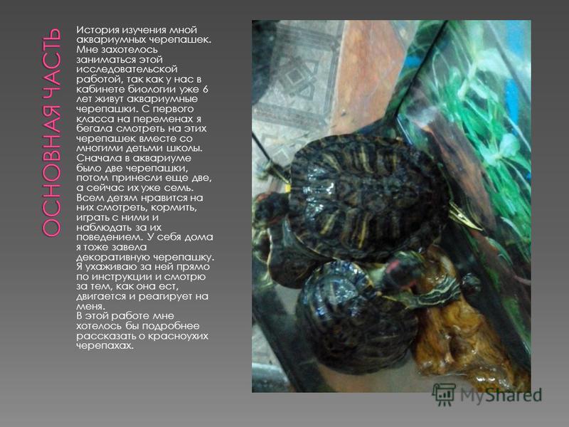 История изучения мной аквариумных черепашек. Мне захотелось заниматься этой исследовательской работой, так как у нас в кабинете биологии уже 6 лет живут аквариумные черепашки. С первого класса на переменах я бегала смотреть на этих черепашек вместе с