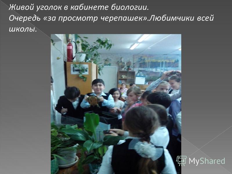 Живой уголок в кабинете биологии. Очередь «за просмотр черепашек».Любимчики всей школы.