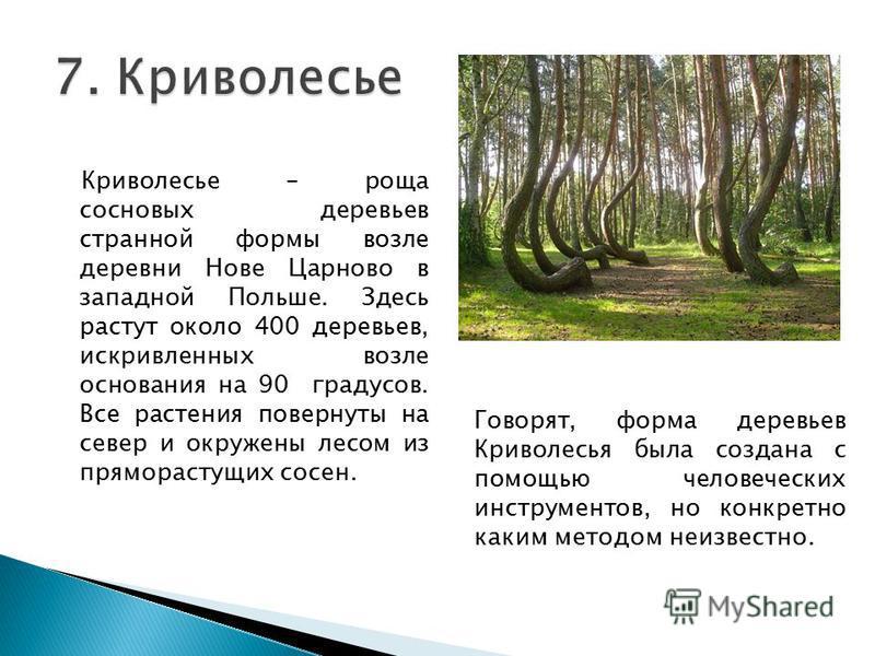 Криволесье – роща сосновых деревьев странной формы возле деревни Нове Царново в западной Польше. Здесь растут около 400 деревьев, искривленных возле основания на 90 градусов. Все растения повернуты на север и окружены лесом из пряморастущих сосен. Го