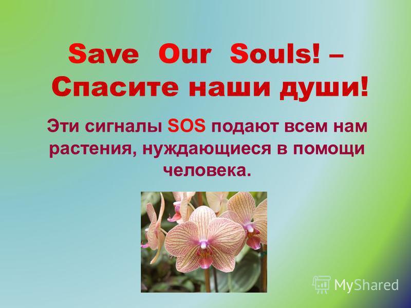 Save Our Souls! – Спасите наши души! Эти сигналы SOS подают всем нам растения, нуждающиеся в помощи человека.
