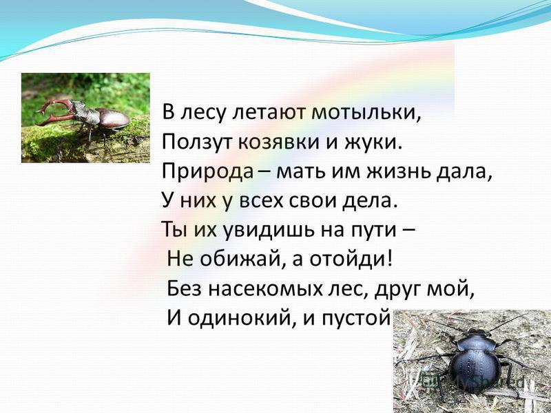 В лесу летают мотыльки, Ползут козявки и жуки. Природа – мать им жизнь дала, У них у всех свои дела. Ты их увидишь на пути – Не обижай, а отойди! Без насекомых лес, друг мой, И одинокий, и пустой.