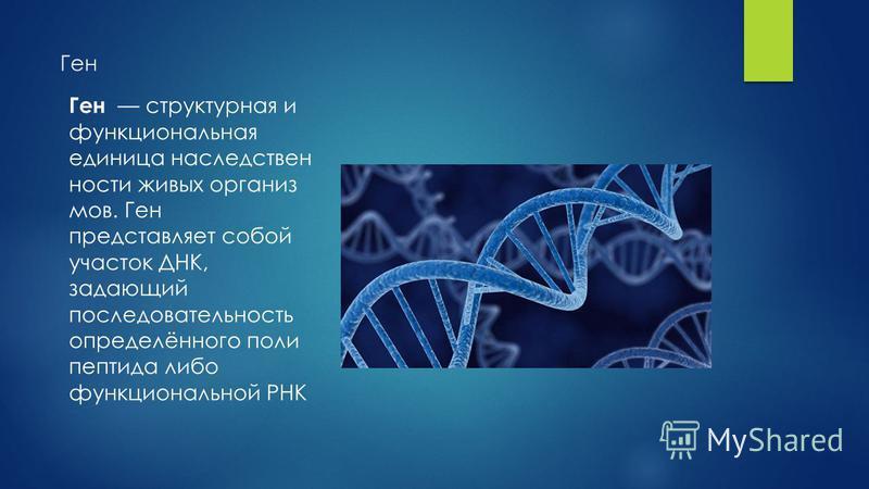 Ген Ген структурная и функциональная единица наследственности живых организмов. Ген представляет собой участок ДНК, задающий последовательность определённого поли пептида либо функциональной РНК