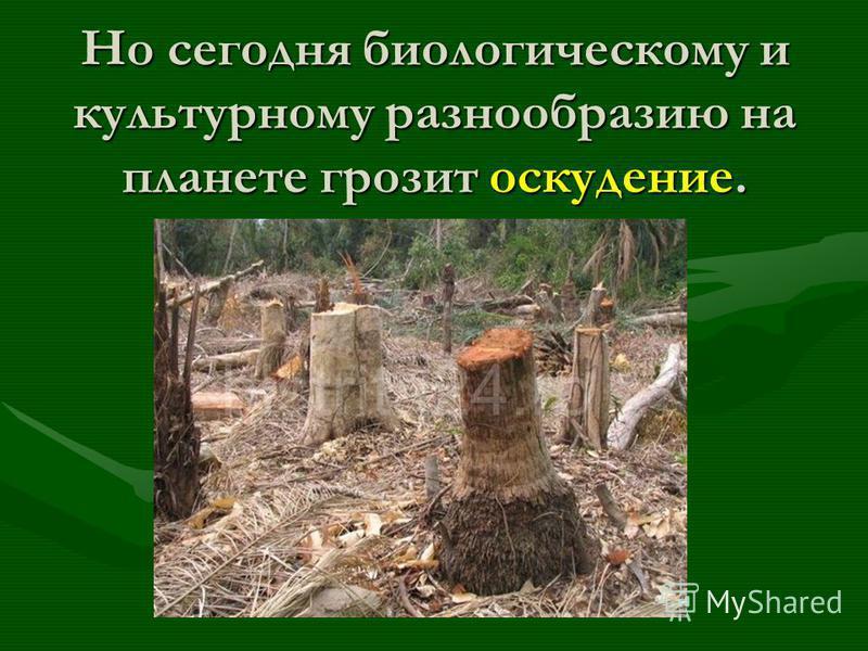 Но сегодня биологическому и культурному разнообразию на планете грозит оскудение. Но сегодня биологическому и культурному разнообразию на планете грозит оскудение.