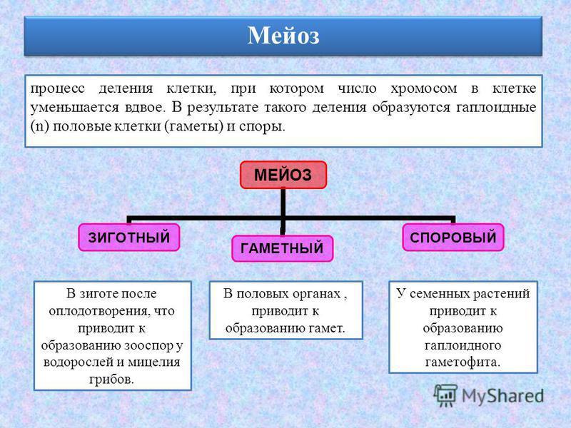 Мейоз процесс деления клетки, при котором число хромосом в клетке уменьшается вдвое. В результате такого деления образуются гаплоидные (n) половые клетки (гаметы) и споры. МЕЙОЗ ЗИГОТНЫЙГАМЕТНЫЙСПОРОВЫЙ В зиготе после оплодотворения, что приводит к о