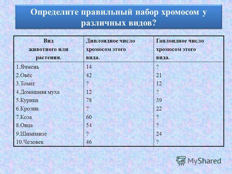 Определите правильный набор хромосом у различных видов? Вид животного или растения. Диплоидное число хромосом этого вида. Гаплоидное число хромосом этого вида. 1. Ячмень 2.Овёс 3. Томат 4. Домашняя муха 5. Курица 6. Кролик 7. Коза 8. Овца 9. Шимпанзе