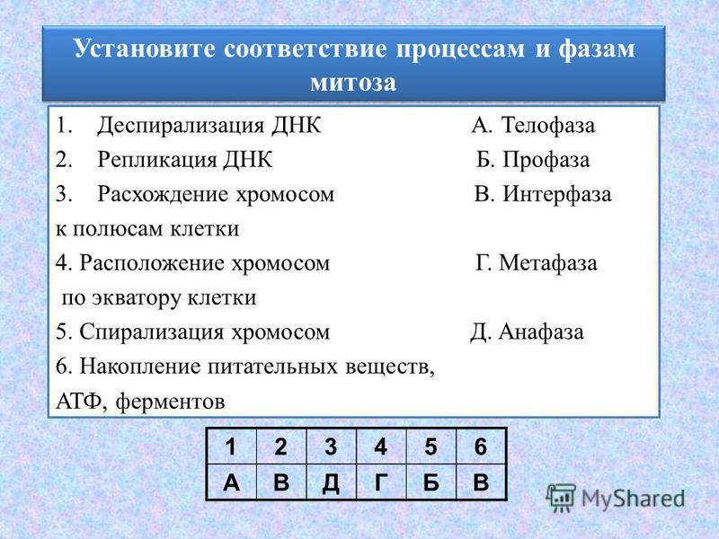 Установите соответствие процессам и фазам митоза 1. Деспирализация ДНК А. Телофаза 2. Репликация ДНК Б. Профаза 3. Расхождение хромосом В. Интерфаза к полюсам клетки 4. Расположение хромосом Г. Метафаза по экватору клетки 5. Спирализация хромосом Д.