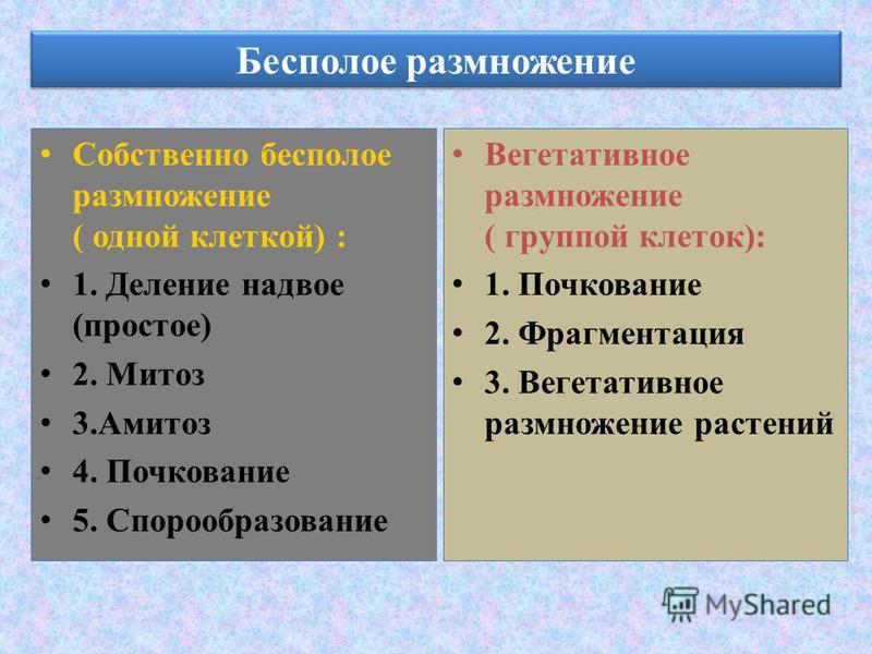Бесполое размножение Собственно бесполое размножение ( одной клеткой) : 1. Деление надвое (простое) 2. Митоз 3. Амитоз 4. Почкование 5. Спорообразование Вегетативное размножение ( группой клеток): 1. Почкование 2. Фрагментация 3. Вегетативное размнож