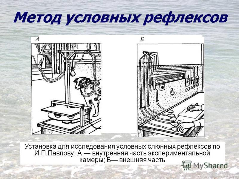 Установка для исследования условных слюнных рефлексов по И.П.Павлову: А внутренняя часть экспериментальной камеры; Б внешняя часть Метод условных рефлексов