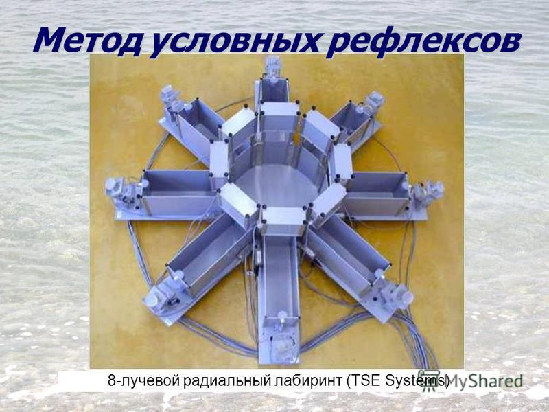 8-лучевой радиальный лабиринт (TSE Systems) Метод условных рефлексов