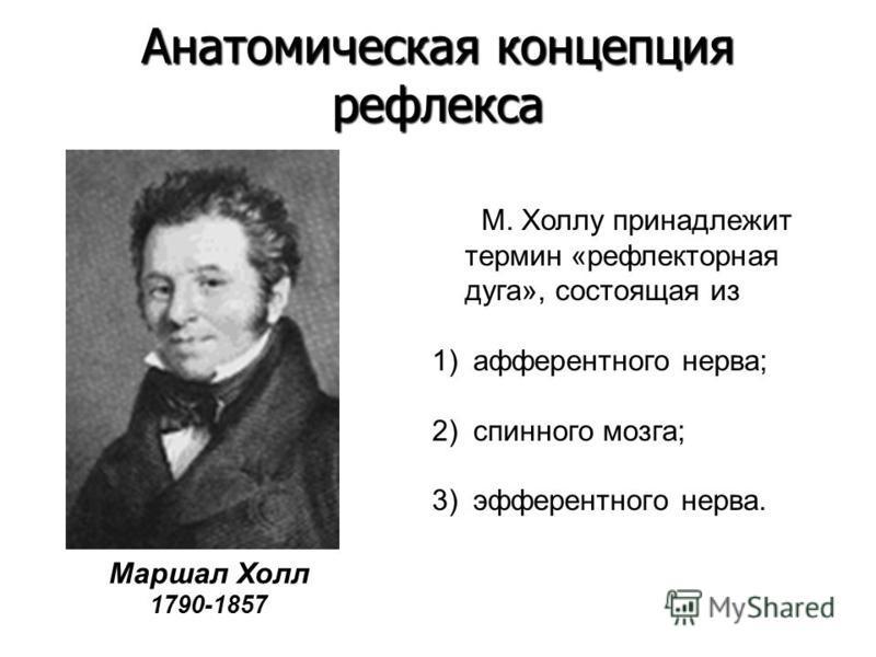 Маршал Холл 1790-1857 М. Холлу принадлежит термин «рефлекторная дуга», состоящая из 1) афферентного нерва; 2) спинного мозга; 3) эфферентного нерва. Анатомическая концепция рефлекса