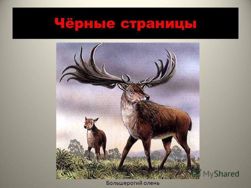 Чёрные страницы Большерогий олень