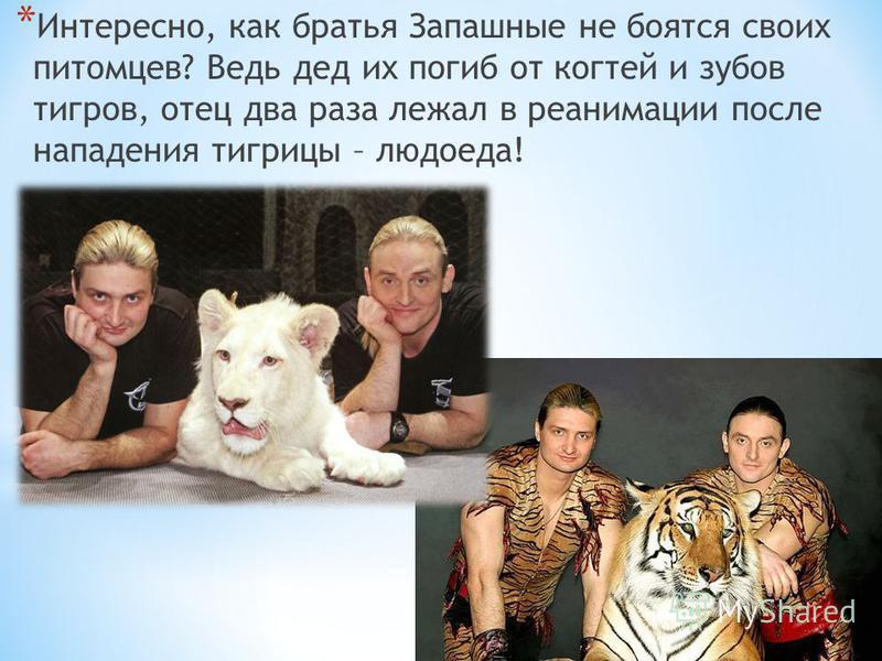 * Интересно, как братья Запашные не боятся своих питомцев? Ведь дед их погиб от когтей и зубов тигров, отец два раза лежал в реанимации после нападения тигрицы – людоеда!