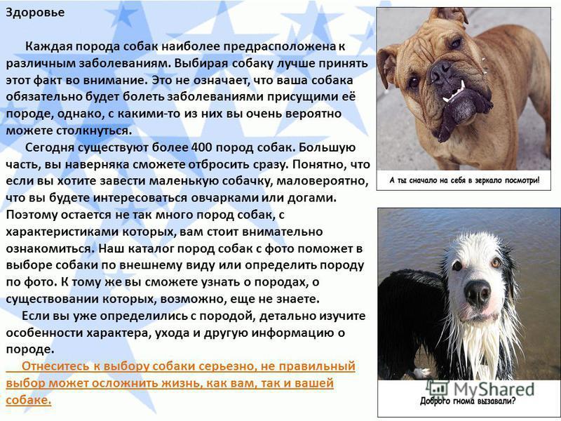 Здоровье Каждая порода собак наиболее предрасположена к различным заболеваниям. Выбирая собаку лучше принять этот факт во внимание. Это не означает, что ваша собака обязательно будет болеть заболеваниями присущими её породе, однако, с какими-то из ни