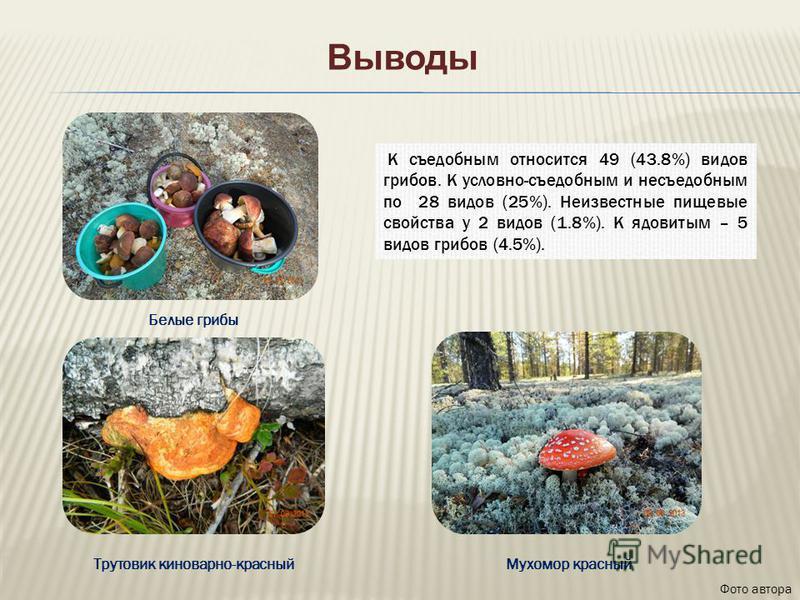Выводы К съедобным относится 49 (43.8%) видов грибов. К условно-съедобным и несъедобным по 28 видов (25%). Неизвестные пищевые свойства у 2 видов (1.8%). К ядовитым – 5 видов грибов (4.5%). Фото автора Мухомор красный Белые грибы Трутовик киноварно-к