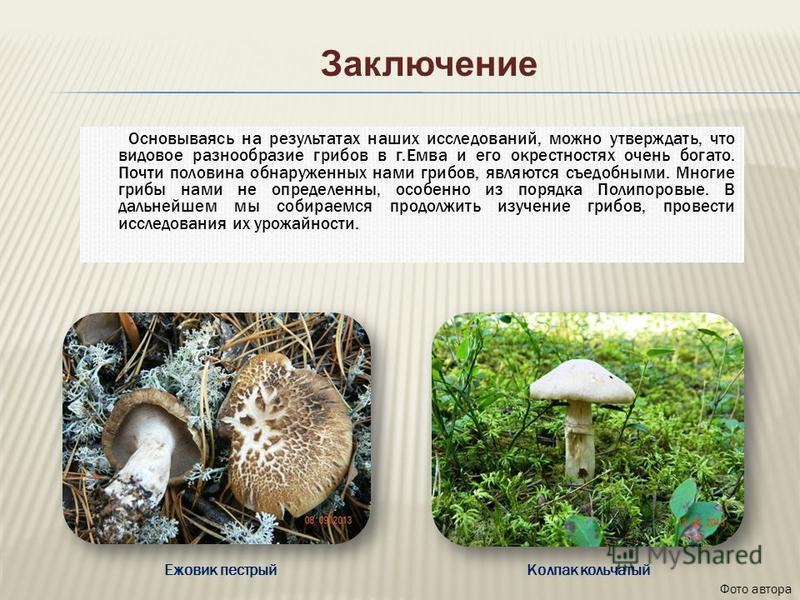 Основываясь на результатах наших исследований, можно утверждать, что видовое разнообразие грибов в г.Емва и его окрестностях очень богато. Почти половина обнаруженных нами грибов, являются съедобными. Многие грибы нами не определенны, особенно из пор