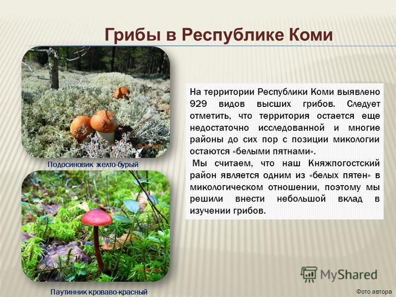 Грибы в Республике Коми На территории Республики Коми выявлено 929 видов высших грибов. Следует отметить, что территория остается еще недостаточно исследованной и многие районы до сих пор с позиции микологии остаются «белыми пятнами». Мы считаем, что