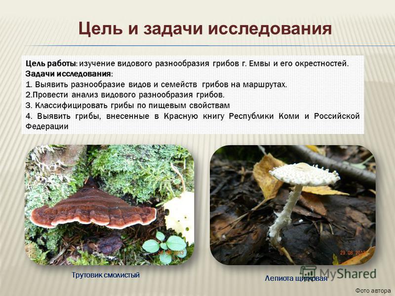 Цель работы: изучение видового разнообразия грибов г. Емвы и его окрестностей. Задачи исследования: 1. Выявить разнообразие видов и семейств грибов на маршрутах. 2. Провести анализ видового разнообразия грибов. 3. Классифицировать грибы по пищевым св