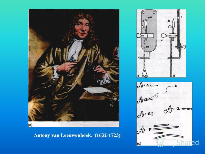. Antony van Leeuwenhoek. (1632-1723)
