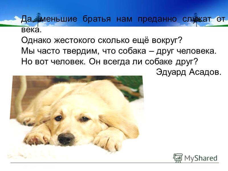 Да, меньшие братья нам преданно служат от века. Однако жестокого сколько ещё вокруг? Мы часто твердим, что собака – друг человека. Но вот человек. Он всегда ли собаке друг? Эдуард Асадов.