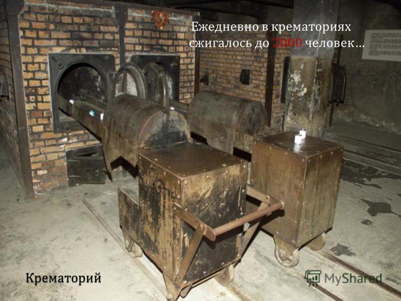Ежедневно в крематориях сжигалось до 2000 человек …