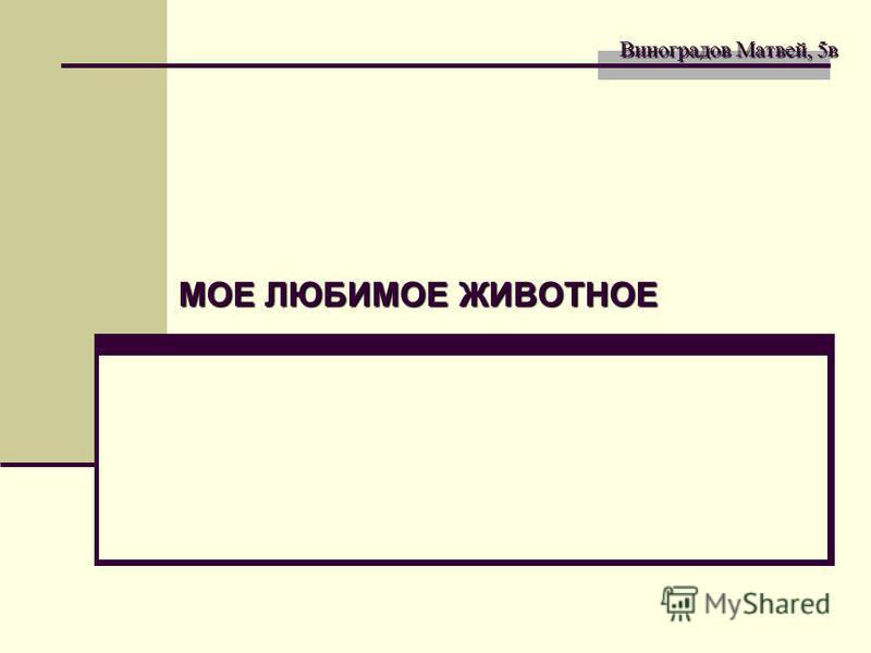 Виноградов Матвей, 5 в Виноградов Матвей, 5 в МОЕ ЛЮБИМОЕ ЖИВОТНОЕ