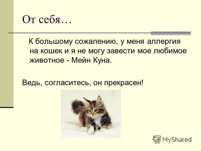 От себя… К большому сожалению, у меня аллергия на кошек и я не могу завести мое любимое животное - Мейн Куна. Ведь, согласитесь, он прекрасен!