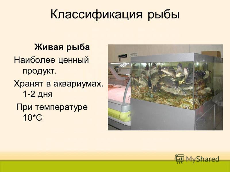Классификация рыбы Живая рыба Наиболее ценный продукт. Хранят в аквариумах. 1-2 дня При температуре 10*С
