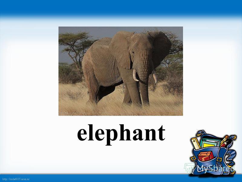 http://linda6035.ucoz.ru/ elephant