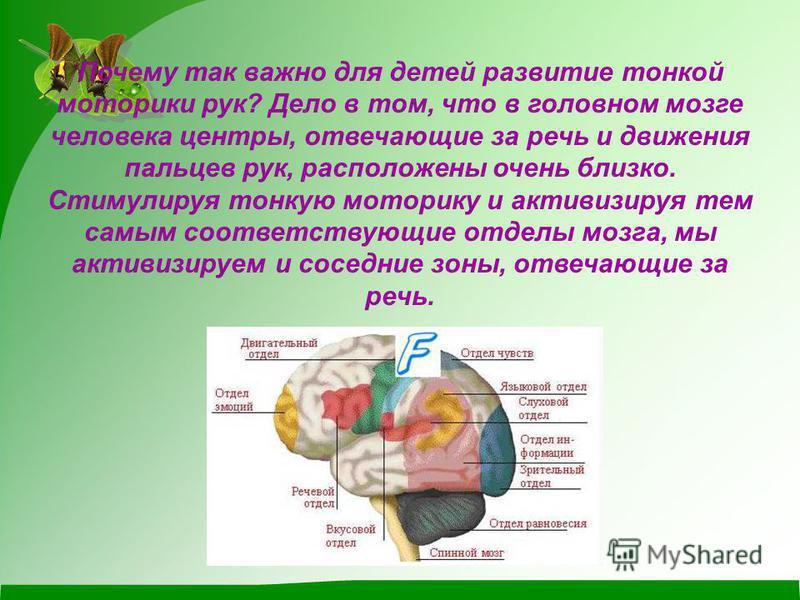 Почему так важно для детей развитие тонкой моторики рук? Дело в том, что в головном мозге человека центры, отвечающие за речь и движения пальцев рук, расположены очень близко. Стимулируя тонкую моторику и активизируя тем самым соответствующие отделы