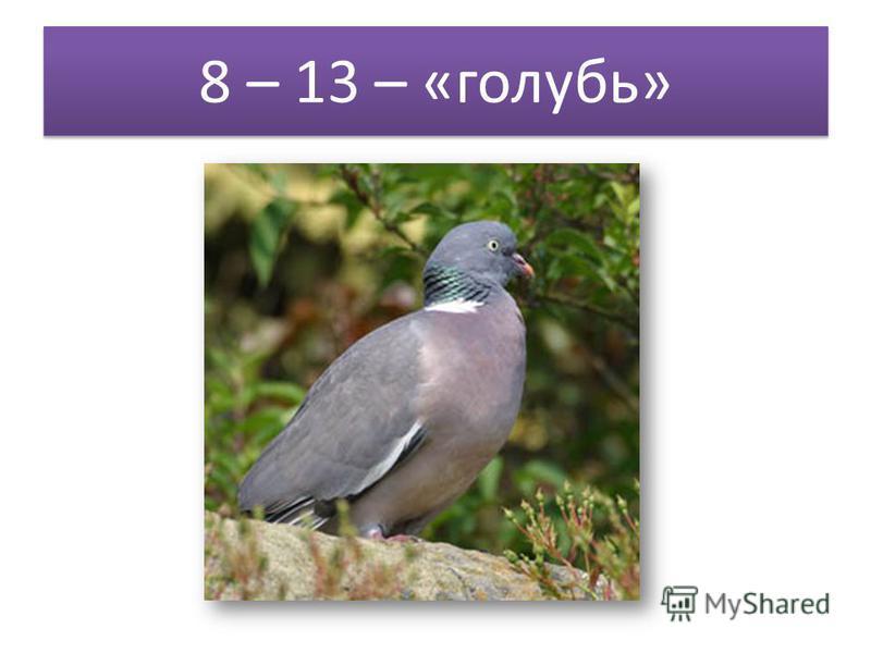 8 – 13 – «голубь»